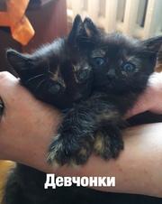 4 темненьких котенка ищут дом